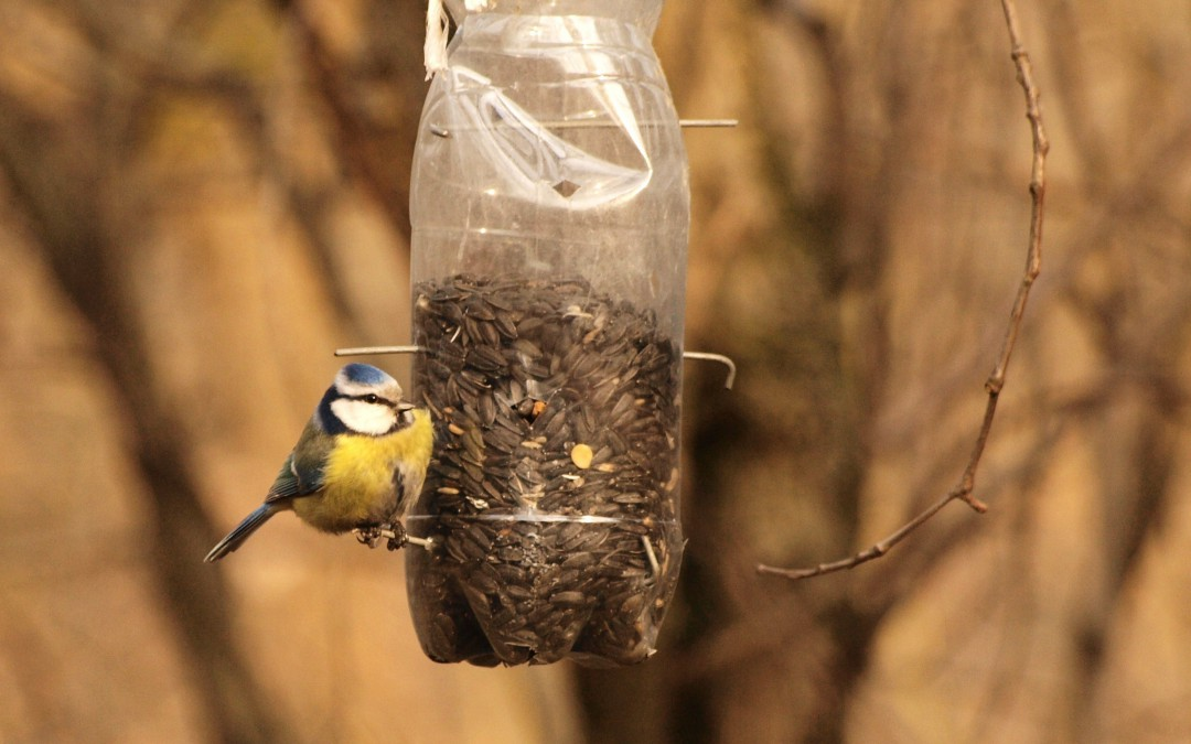 D.I.Y Series: Making an Eco-Friendly Bird Feeder!