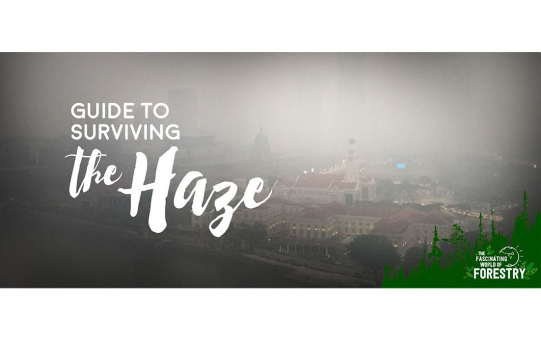 Guide to Surviving the Haze