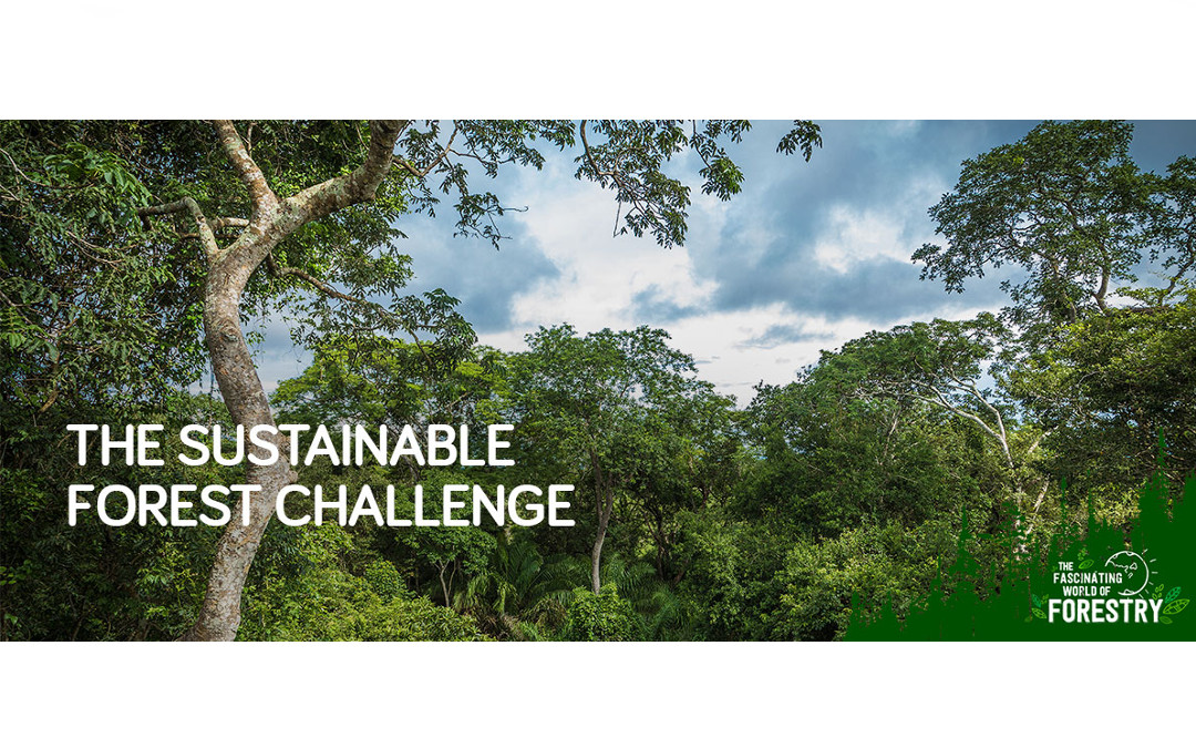 The Sustainable Forest Challenge