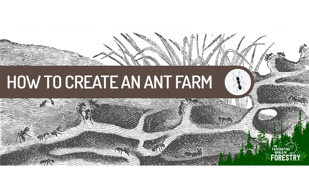 DIY Series: How to create an Ant Farm
