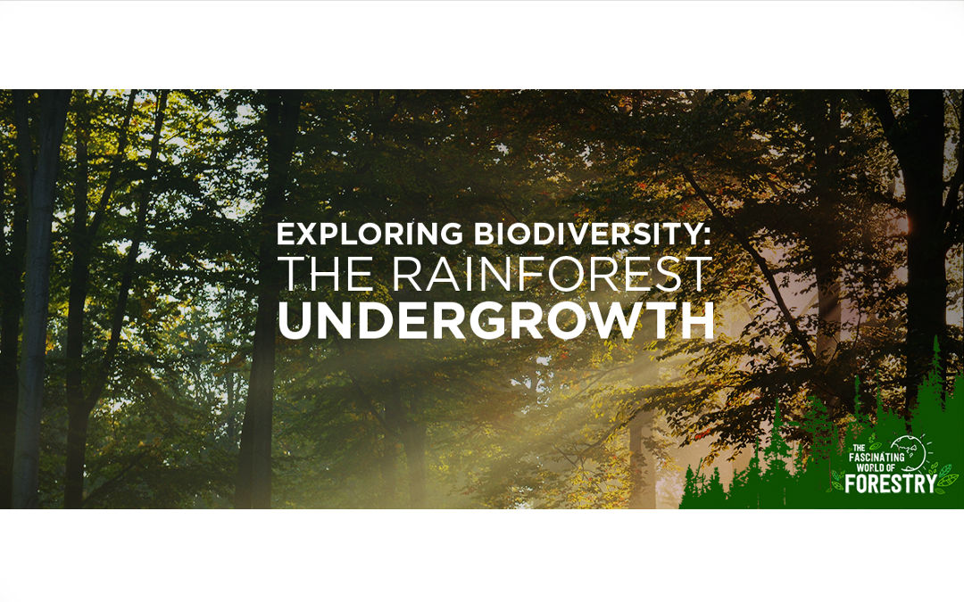 Exploring Biodiversity: The Rainforest Undergrowth