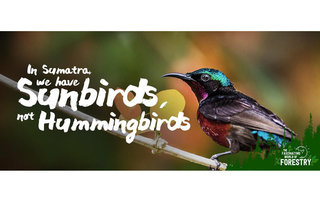 In Sumatra We Have Sunbirds, Not Hummingbirds
