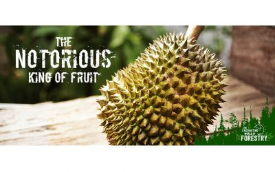The Notorious King of Fruit